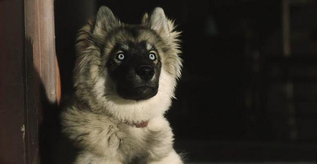 拯救人類的雪橇犬。這隻狗的故事。值得被記住 - 每日頭條