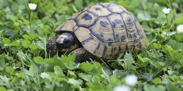 龜友分享——你見過的最實用的養龜心得 - 每日頭條