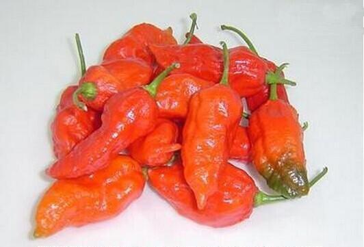 最辣的辣椒排名 - 每日頭條