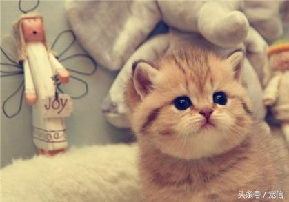 貓咪疫苗全攻略 - 每日頭條
