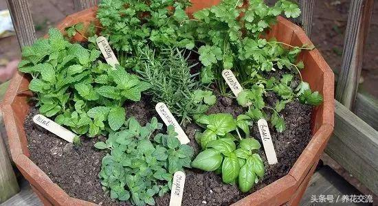 在窗臺上種上這20盆組合盆栽香草植物,整個家裡都是迷人的清香 - 每日頭條