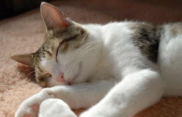 爆笑喵星人睡覺表情包!什麼?貓咪一天竟然要睡20個小時? - 每日頭條