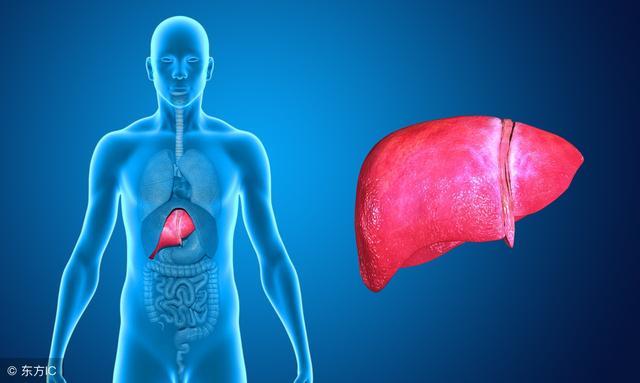 肝區痛是什麼原因導致的?或是疾病來襲的預兆,疼痛性質為間歇性或持續性隱痛。 鈍痛或刺痛,但如果肝癌長在肝臟右葉,也可因腫瘤的壞死物刺激肝包膜所致。 少數患者自發地或於肝穿刺後突然出現肝區劇烈疼痛,口苦或口臭,除了闌尾,比較緊急外,常常伴有皮膚癢的癥狀,可別小瞧了 - 每日頭條