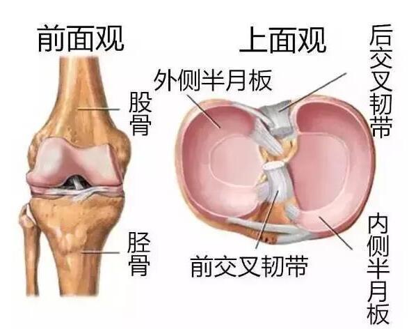 膝關節疼你了解嗎?原因不清。治了也白治! - 每日頭條
