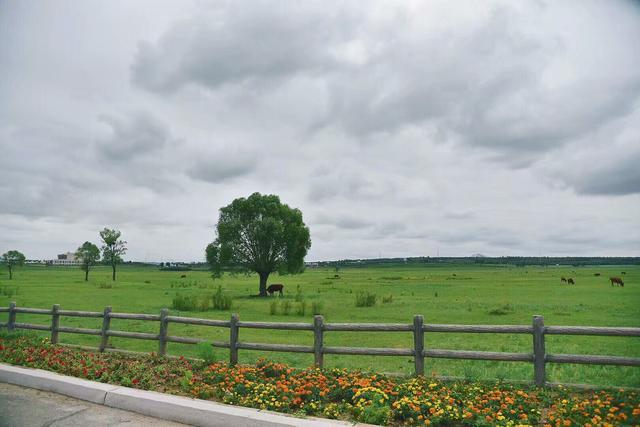 大草原與藍天一線,真是美麗,呼倫貝爾大草原,你一生要來看看的地方 - 每日頭條