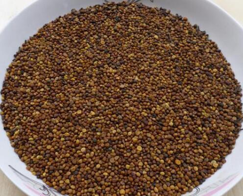 菟絲子是一種性味甘溫的中藥材,具有滋補肝腎,固精縮尿等功效 - 每日頭條