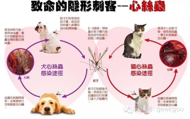 你的狗狗是否也有心絲蟲? - 每日頭條