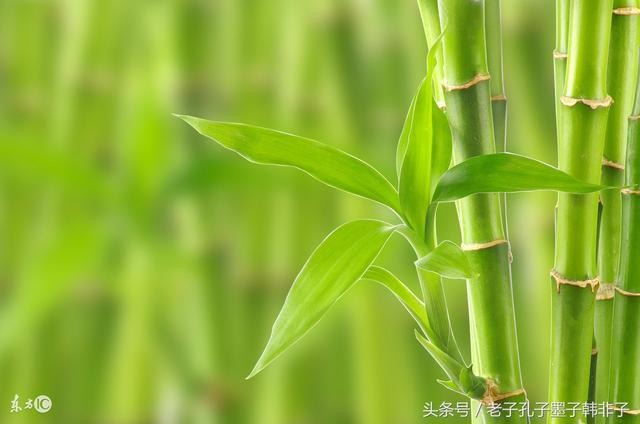 鄭板橋(鄭燮)的竹子:「一枝一葉總關情」 - 每日頭條