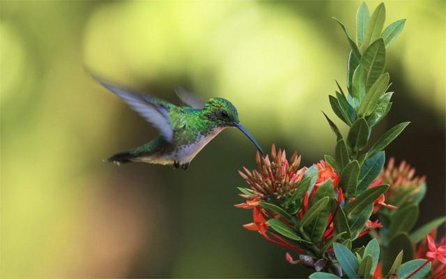 翠鳥對生態環境要求比較高。是一種環境指示物種 - 每日頭條