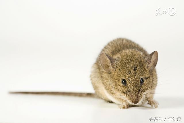 屬鼠人:你是白天出生的還是晚上出生的?決定了你一生的命運! - 每日頭條