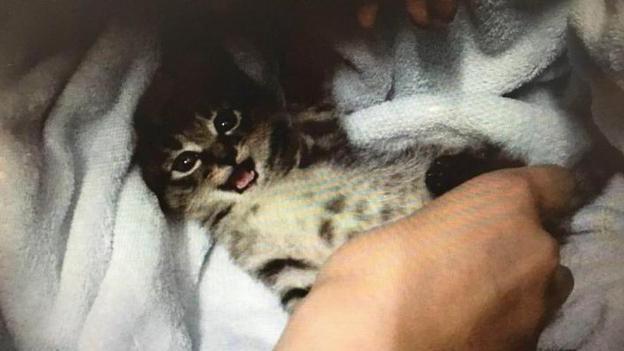 了解貓咪體內體外驅蟲。用什麼藥好呢? - 每日頭條