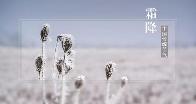 今日霜降丨秋色盡。早晚清寒。願君多珍重 - 每日頭條
