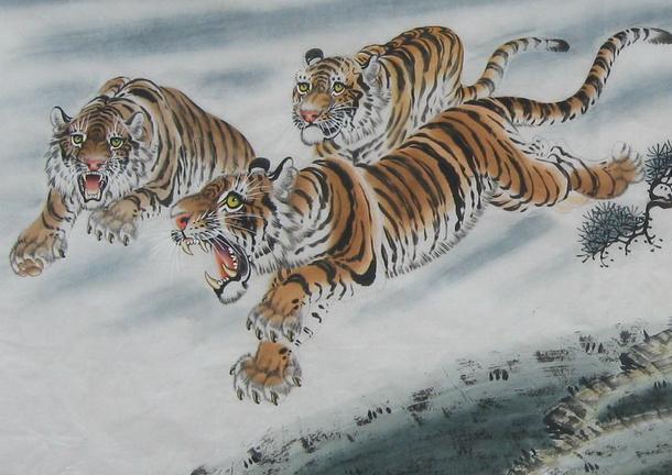 屬虎人大吉。62年的虎笑了!虎中之虎 - 每日頭條