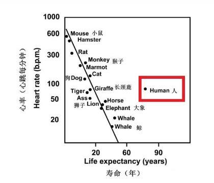 人一生的心跳只有25億次。所以心跳越慢越健康? - 每日頭條