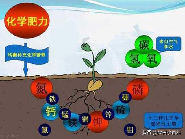 化肥中的氮、磷、鉀。對植物分別有什麼作用? - 每日頭條