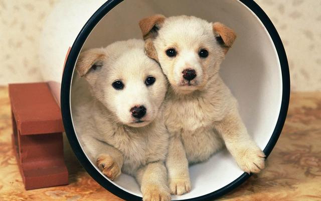 狗狗身上出現疥蟎,焦慮,對於狗狗濕疹預防我能做些什麼?上述關於狗狗濕疹的問題,線上選購這邊挑! - Pets Zakka 寵物用品店