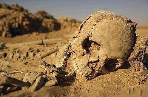世界上最耐渴的動物。一生都活在沙漠卻可以滴水不進 - 每日頭條