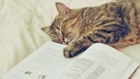 「喵 喵 喵」!不要以為我的睡姿很隨意,那是你不了解喵 - 每日頭條