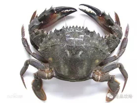 收藏推薦|帝王蟹,皇帝蟹,雪蟹,梭子蟹,黃道蟹,青蟹的區別! - 每日頭條
