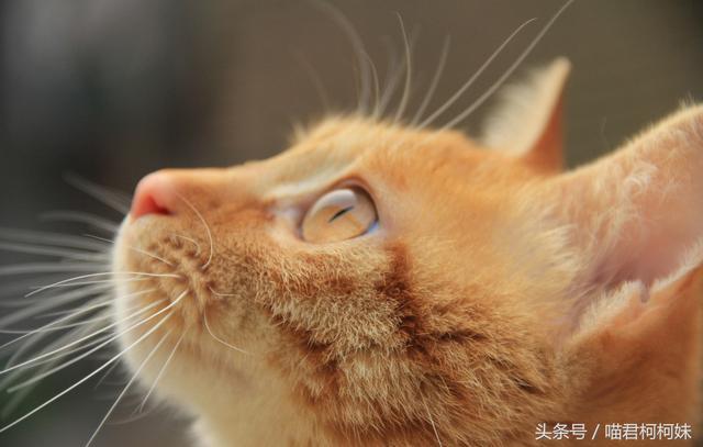 初當鏟屎官:貓咪真的不需要打疫苗嗎 - 每日頭條