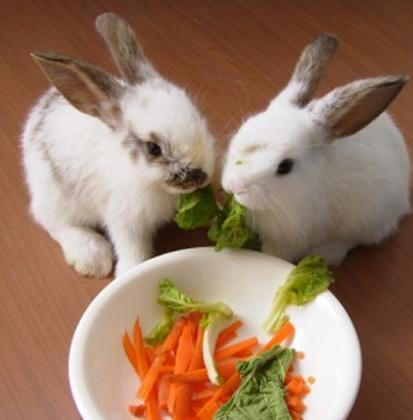 怎麼給兔子剪牙 最好是去寵物醫院 - 每日頭條