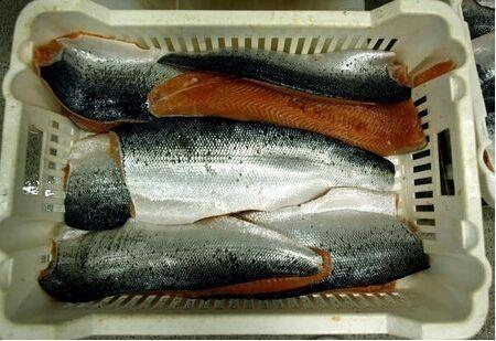 三菱商事將斥巨資收購挪威鮭魚養殖企業 - 每日頭條