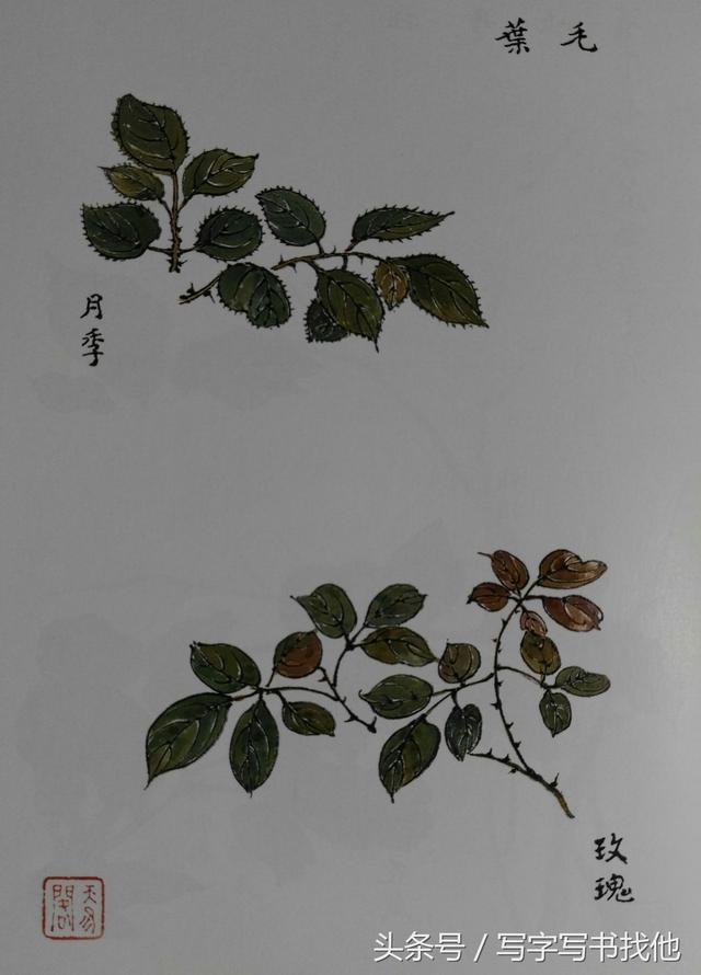 薔薇牡丹山茶月季玫瑰桃杏等。花頭葉子花梗怎麼畫? - 每日頭條