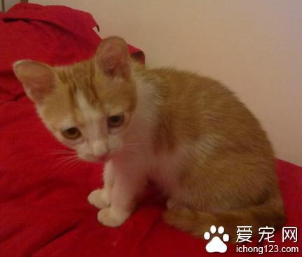 奶貓吃什麼 剛出生的小貓主要喝貓奶 - 每日頭條