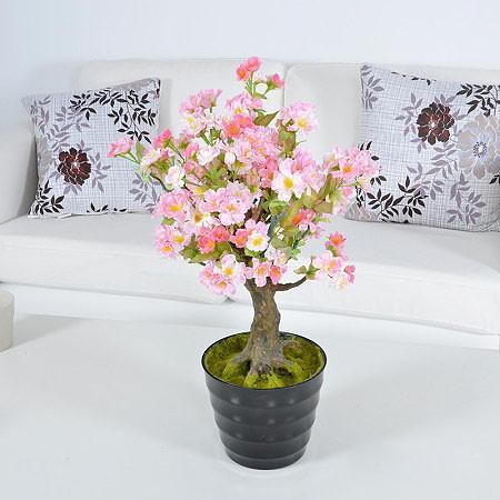 把桃花搬進屋裡再美不過了!來看桃花盆栽養植細節~ - 每日頭條