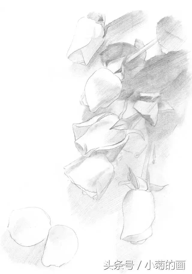 素描|教你怎麼零基礎學素描:玫瑰贈佳人 - 每日頭條