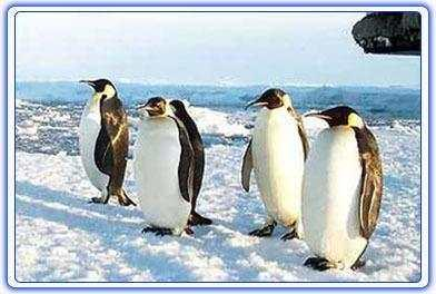 真正的企鵝已經在北極滅絕,科學家:南極企鵝是「假」企鵝 - 每日頭條