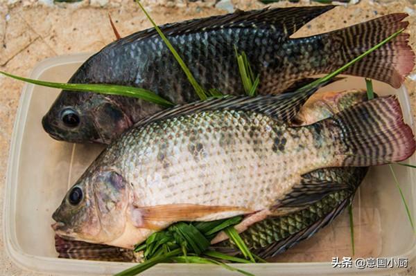 羅非魚是不是很髒。為什麼說吃羅非魚有害? - 每日頭條