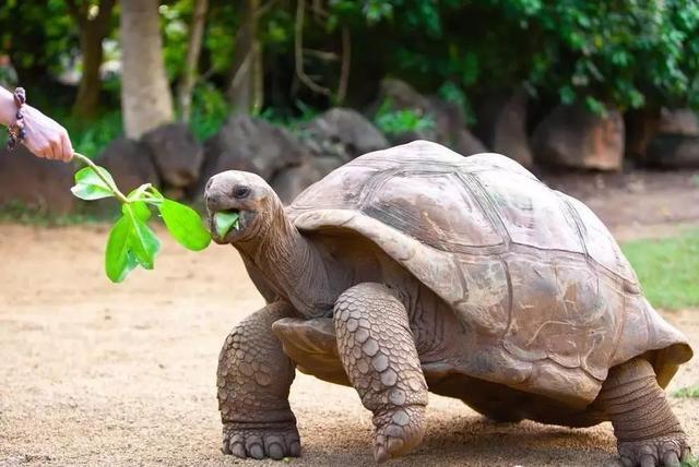 冬季養陸龜的幾個要點 - 每日頭條