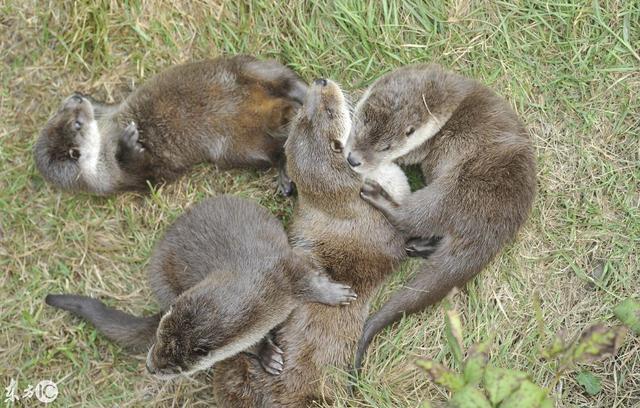 超可愛水懶被發現。攝影師的姨母心都要被融化了。你被撩到了嗎 - 每日頭條