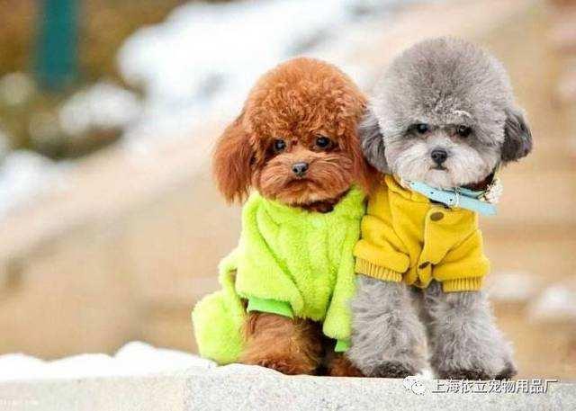 寵物狗百科全書(上)中小型犬有哪些品種?各有怎樣的性格特點? - 每日頭條