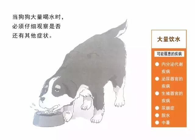 狗狗常見疾病圖解:大量喝水 - 每日頭條