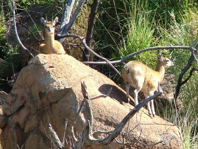 最忠誠的動物夫妻 一生不離開其配偶5.03米以上 - 每日頭條
