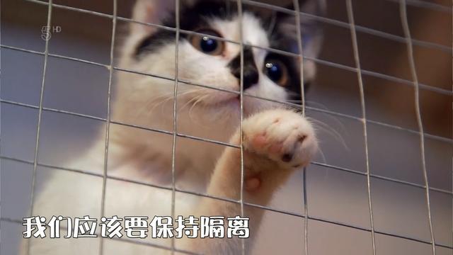 幼貓咳嗽,打噴嚏,流鼻涕不一定是感冒?小心上呼吸道感染! - 每日頭條