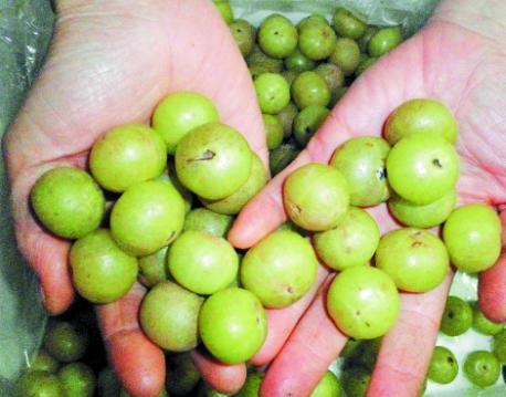 農村這果子能摘了,先苦後甜味道好,卻很多人不知道 - 每日頭條