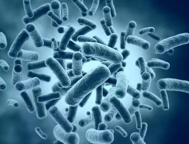 微生物標本送檢知多少 - 每日頭條