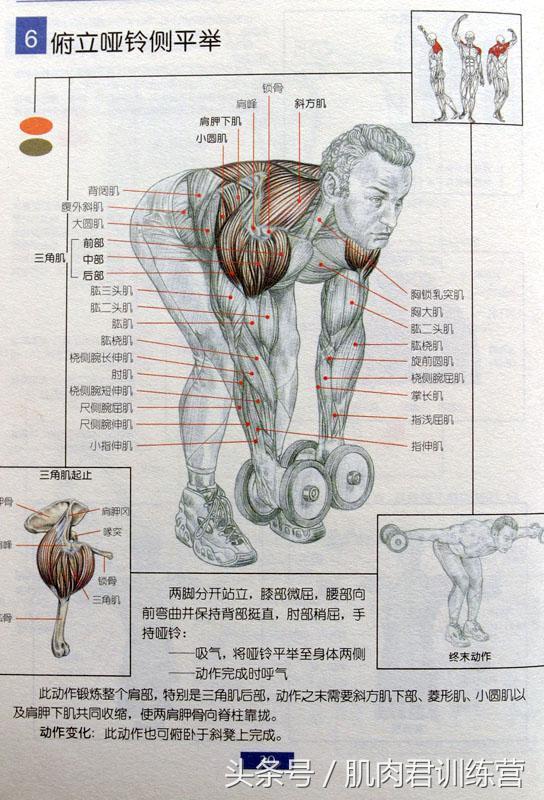別再瞎練了,29張圖告訴你每個部位該怎麼練! - 每日頭條