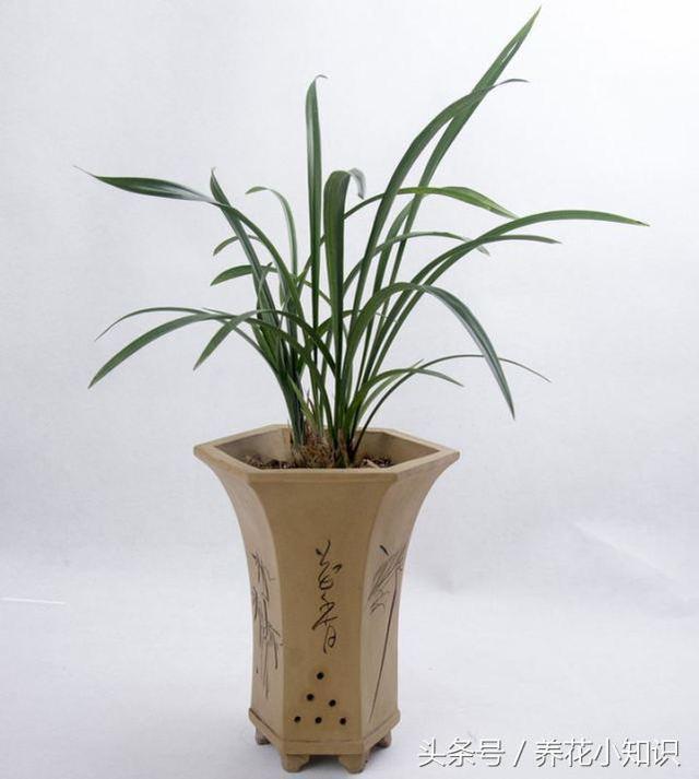 用這兩種水澆蘭花比營養液效果還好。花開滿盆不再是夢想! - 每日頭條