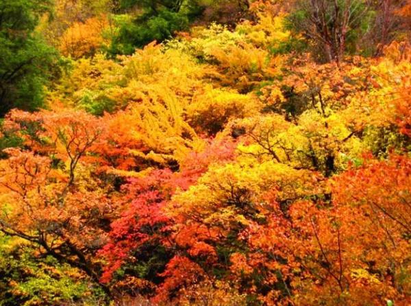 等了那麼久 棲霞山這一片秋色美得猶如仙境 - 每日頭條
