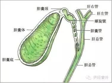 醫學常識 | 保膽取石,膽囊結石的「非主流」手術 - 每日頭條