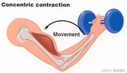 掌握肌肉收縮運動模式,輕鬆突破健身訓練瓶頸! - 每日頭條
