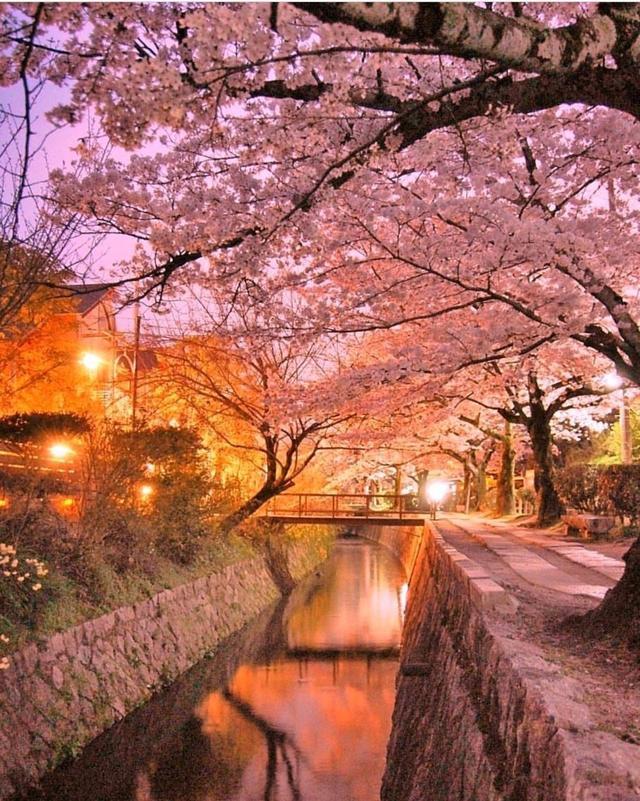 春光乍泄|日本賞櫻10大絕景地 - 每日頭條