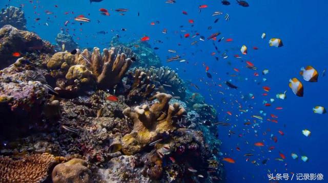 《藍色星球2》第三集:Coral.Reefs 珊瑚礁 - 每日頭條