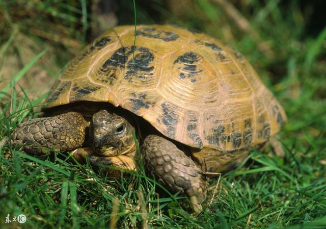 陸龜每天應該吃多少食物? - 每日頭條
