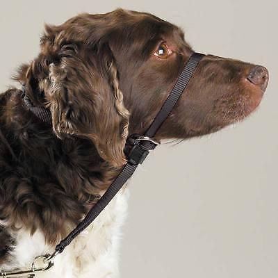 不同品種、體型大小不同的狗狗牽引繩如何選擇 - 每日頭條