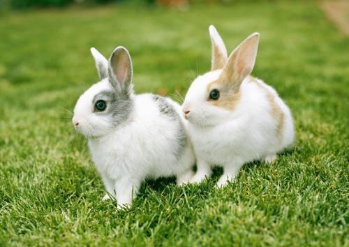 農村發展沒出路?看農村養兔如何發家致富! - 每日頭條